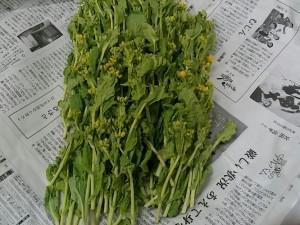 RedRice 自然農園さんの 菜の花