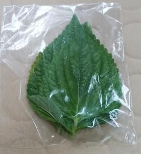 エゴマの葉