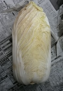 小川白菜0150128_110355