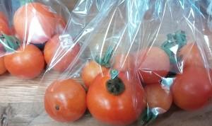 プラネットミニトマト 440