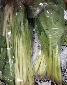 のらくら小松菜150707_111445