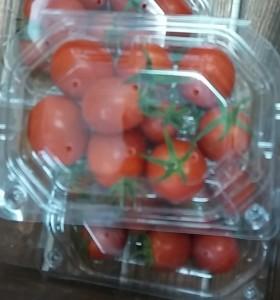 ありがとうトマト20150907_115154